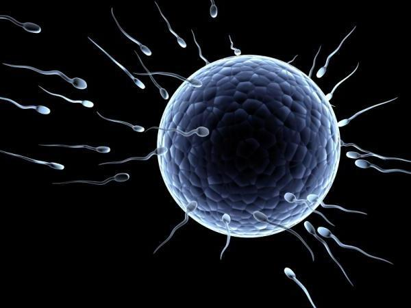 плодное яйцо без эмбриона