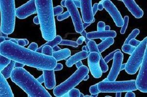 Что пить при дисбактериозе кишечника от антибиотиков 1