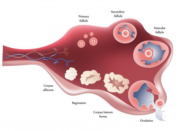 Беременность на клостилбегите отзывы