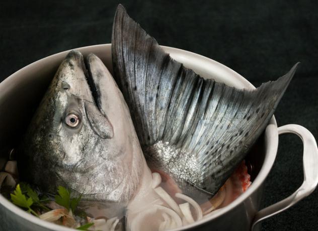 Как варить уху из головы рыбы? Рецепт приготовления