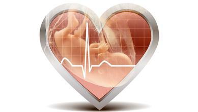определение пола по сердцебиению плода