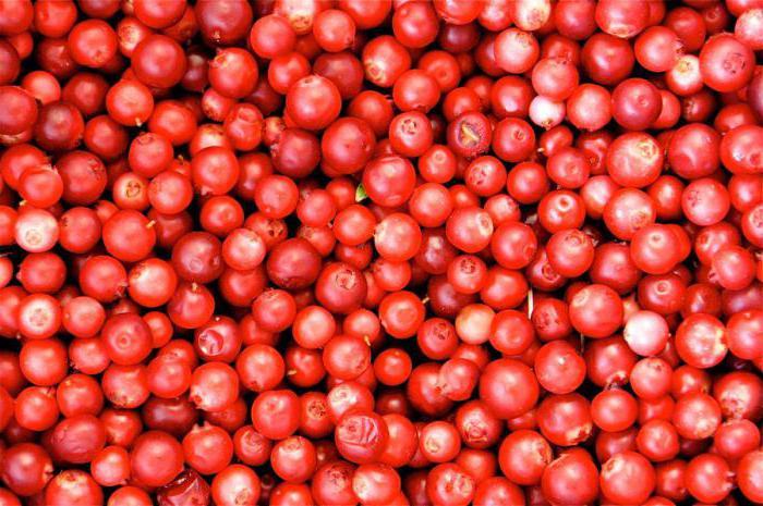 брусника фото ягода