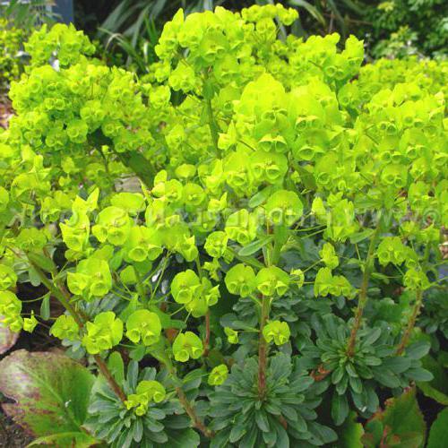 Виды цветковых растений названия и фото
