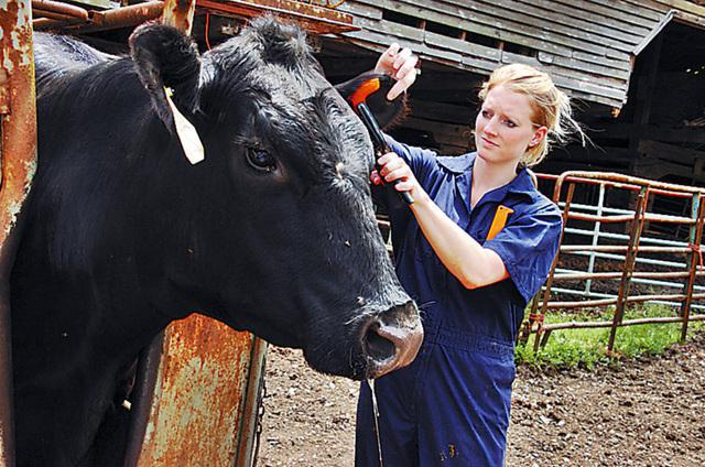 гнойно катаральный эндометрит у коров