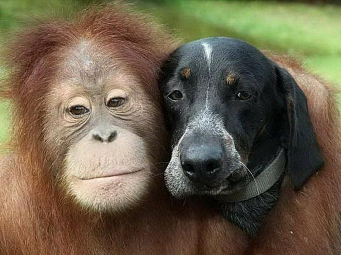 Женщина Обезьяна и мужчина Собака