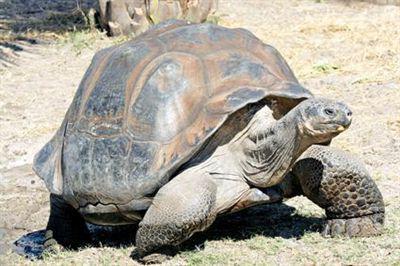 панцирь черепах