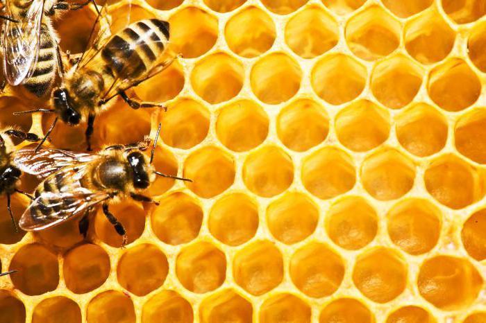 можно ли нагревать мед и до какой температуры