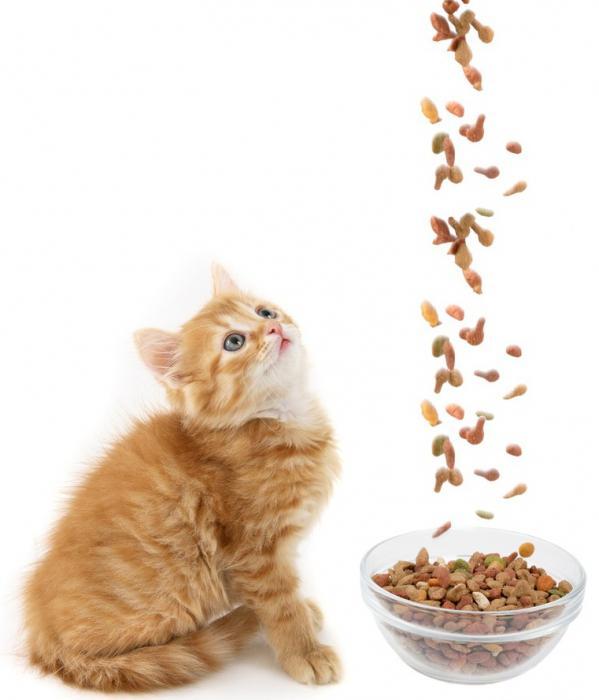 Корм для котят премиум класса сухой