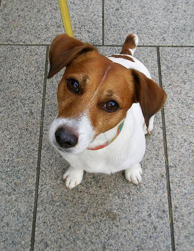 Какая порода у собаки из фильма маска