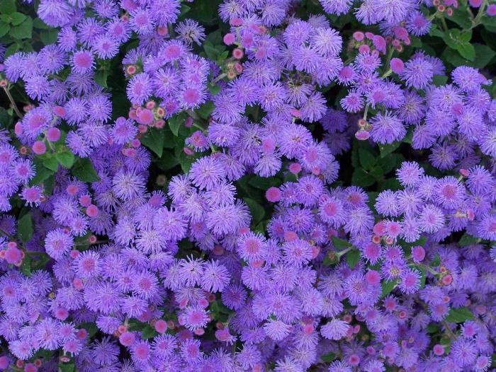 цветы сеять на рассаду в феврале