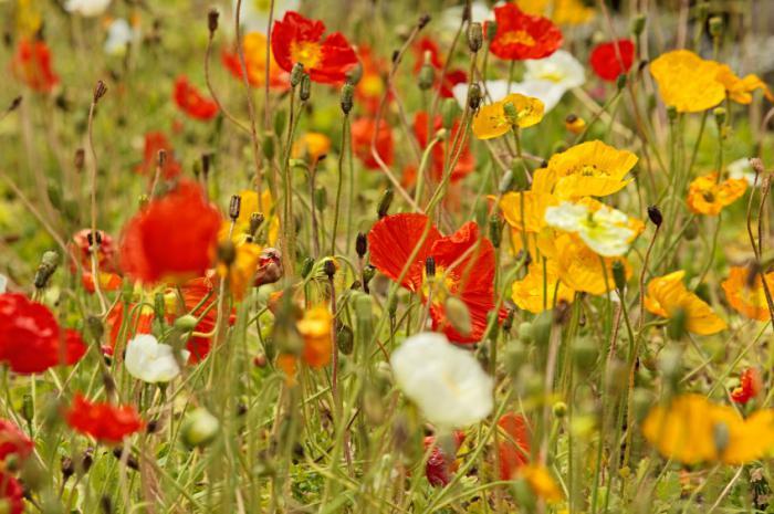 какие февральские цветы на рассаду