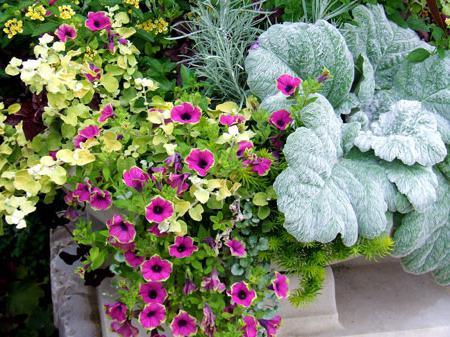 февральские цветы на рассаду
