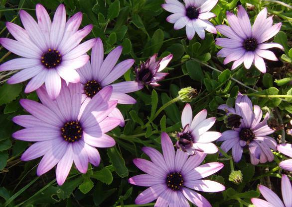 какие цветы на рассаду сеять в феврале