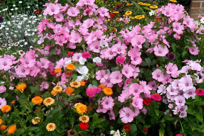 какие цветы сеять на рассаду в феврале