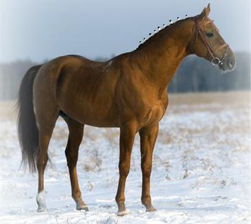 лошади донских казаков