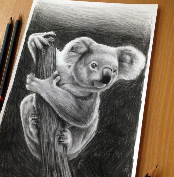 How to draw a Koala. Introduction