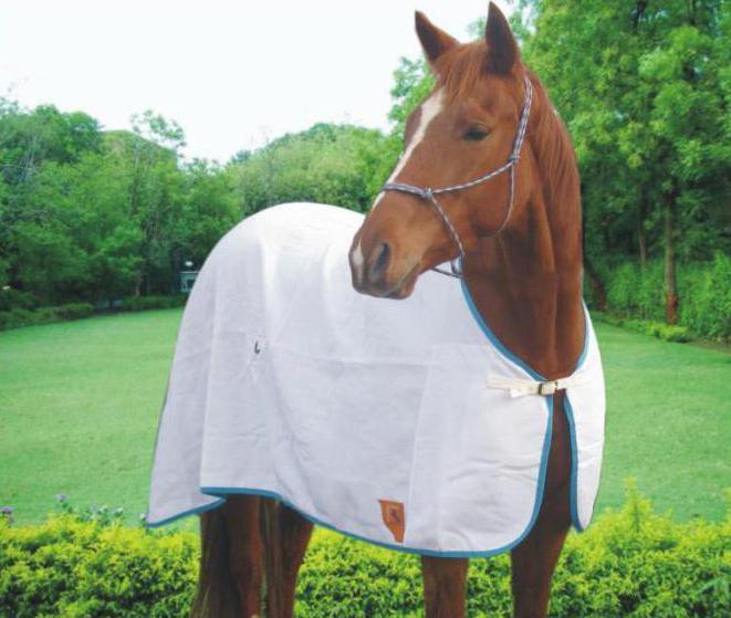 Попона на лошадь своими руками