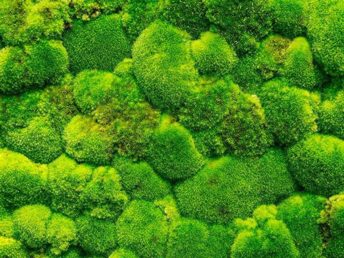 декоративный искусственный мох