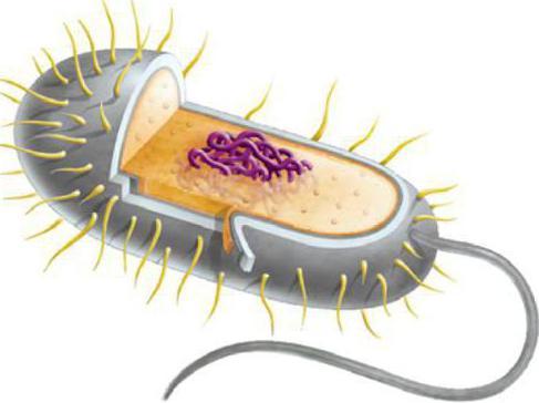 какие организмы называются паразитами