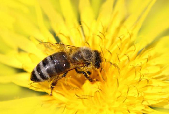 можно ли мед при правильном питании