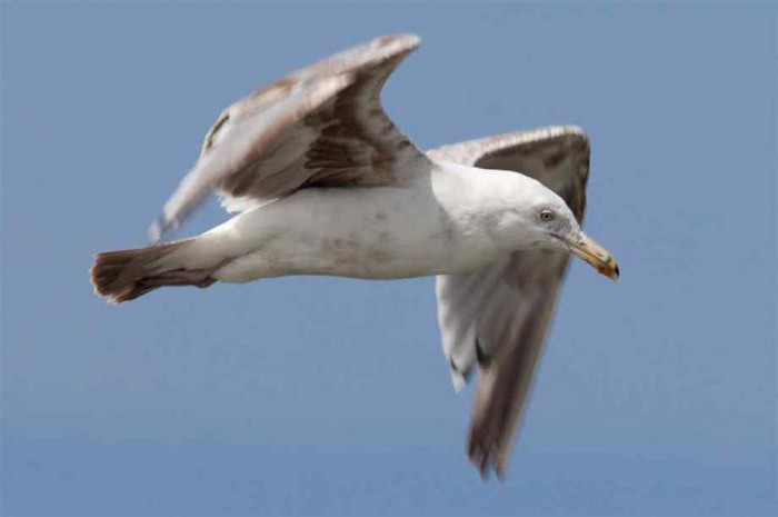 How to draw a Seagull? Useful tips