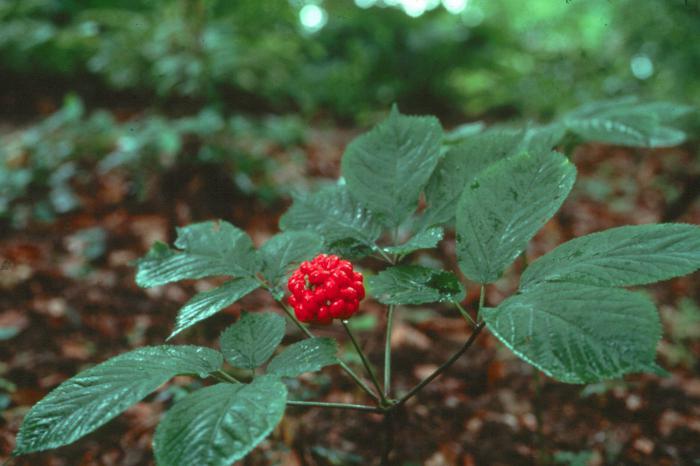 редкие растения красной книги россии