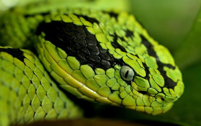 знаки зодиака год змеи