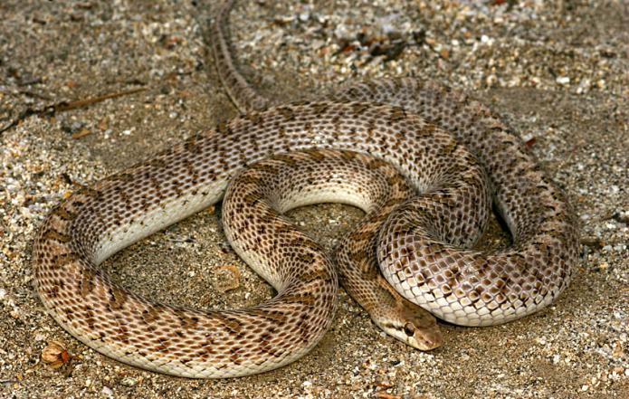 год змеи под знаком козерог