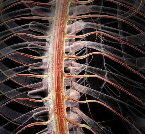 Органы нервной системы