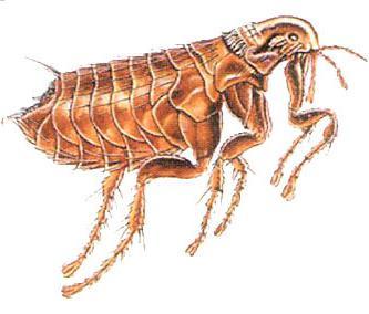 как выводить паразитов из организма