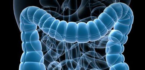 болезни кишечника симптомы и лечение