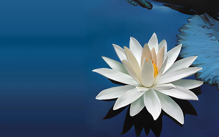 цветок лотоса что означает