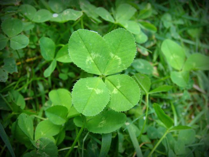 Как привлечь удачу и везение в свою жизнь