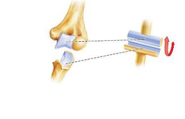 голеностопный сустав анатомия