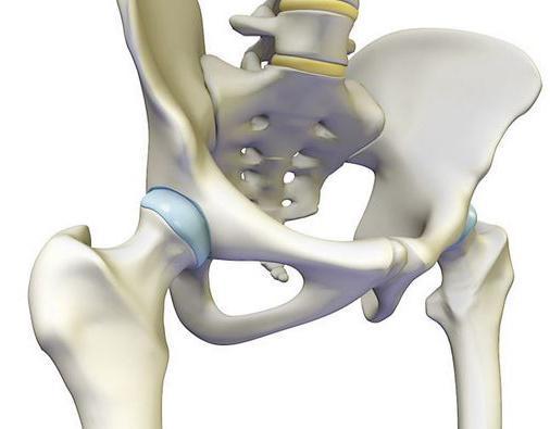 суставы человека анатомия
