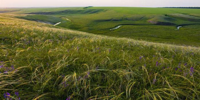 знакомства ефремов тульской области
