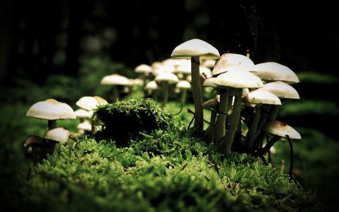 строение клеток грибов