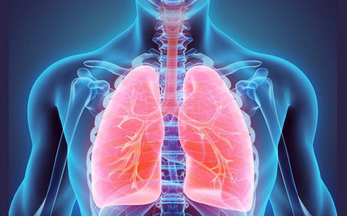 pulmonary ventilation breathing way lungs work