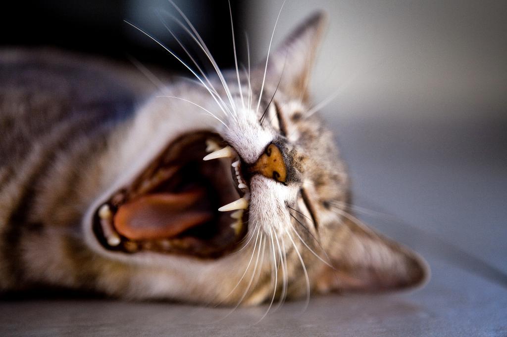зачем коту усы самые популярные вопросы