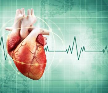 1 тон сердца