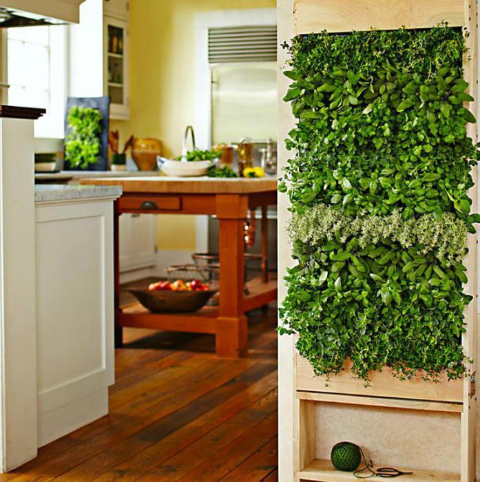 виды вертикального озеленения