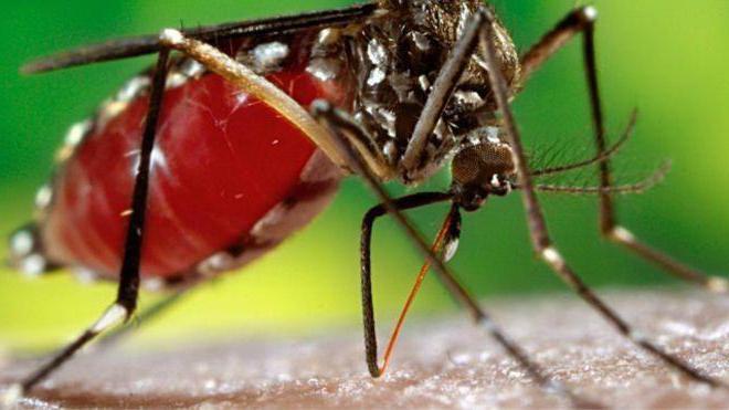 Лихорадка денге форум