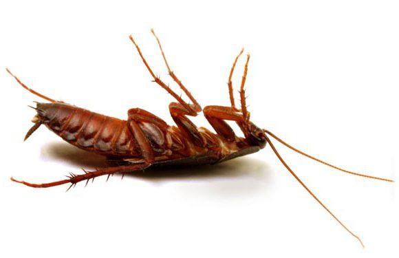 маленькие тараканы в ванной