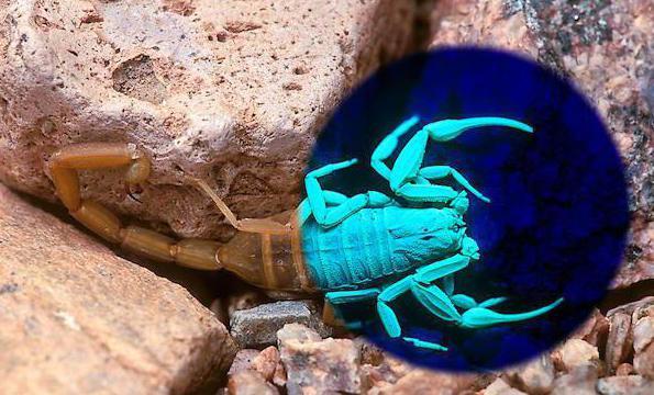 Кровь у скорпиона какого цвета
