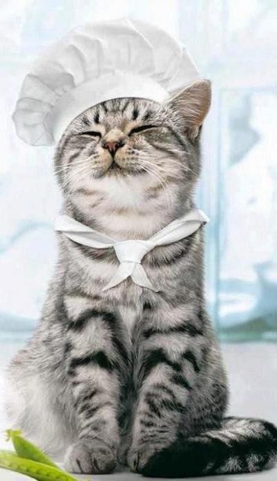 сколько раз в день кормить котенка