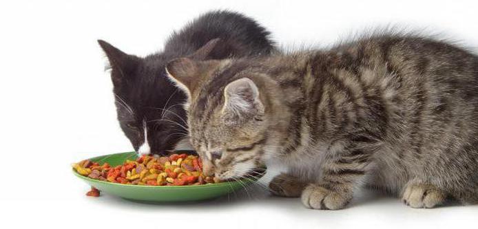 с какого возраста котятам можно сухой корм