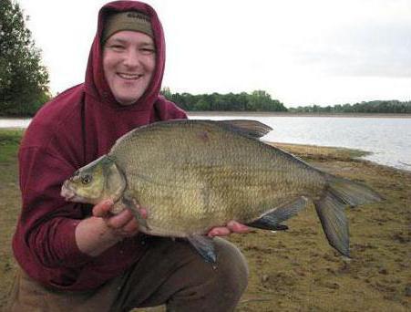 Бойлы для рыбалки