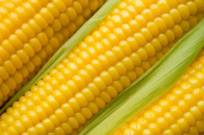 Под Харьковом украли 160 кг кукурузы
