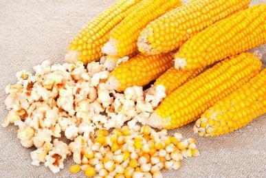 сорт кукурузы для попкорна