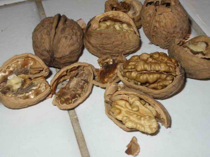 когда лучше собирать грецкие орехи